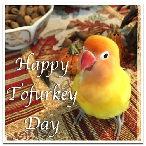 Happy Tofurkey Day