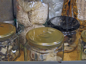 Stuff in Jars