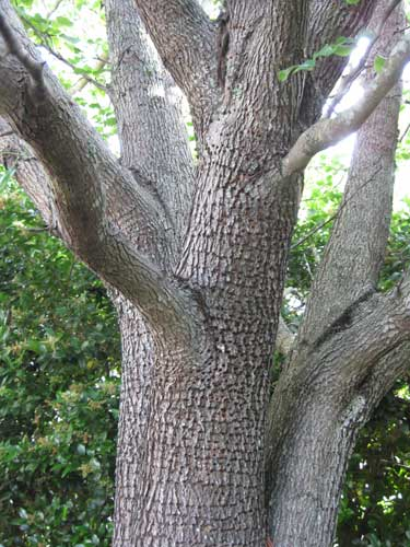 Holey Tree