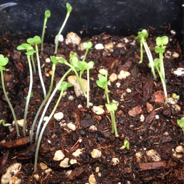 Seedlings, Seeds from Seedpods of Unknown Plants